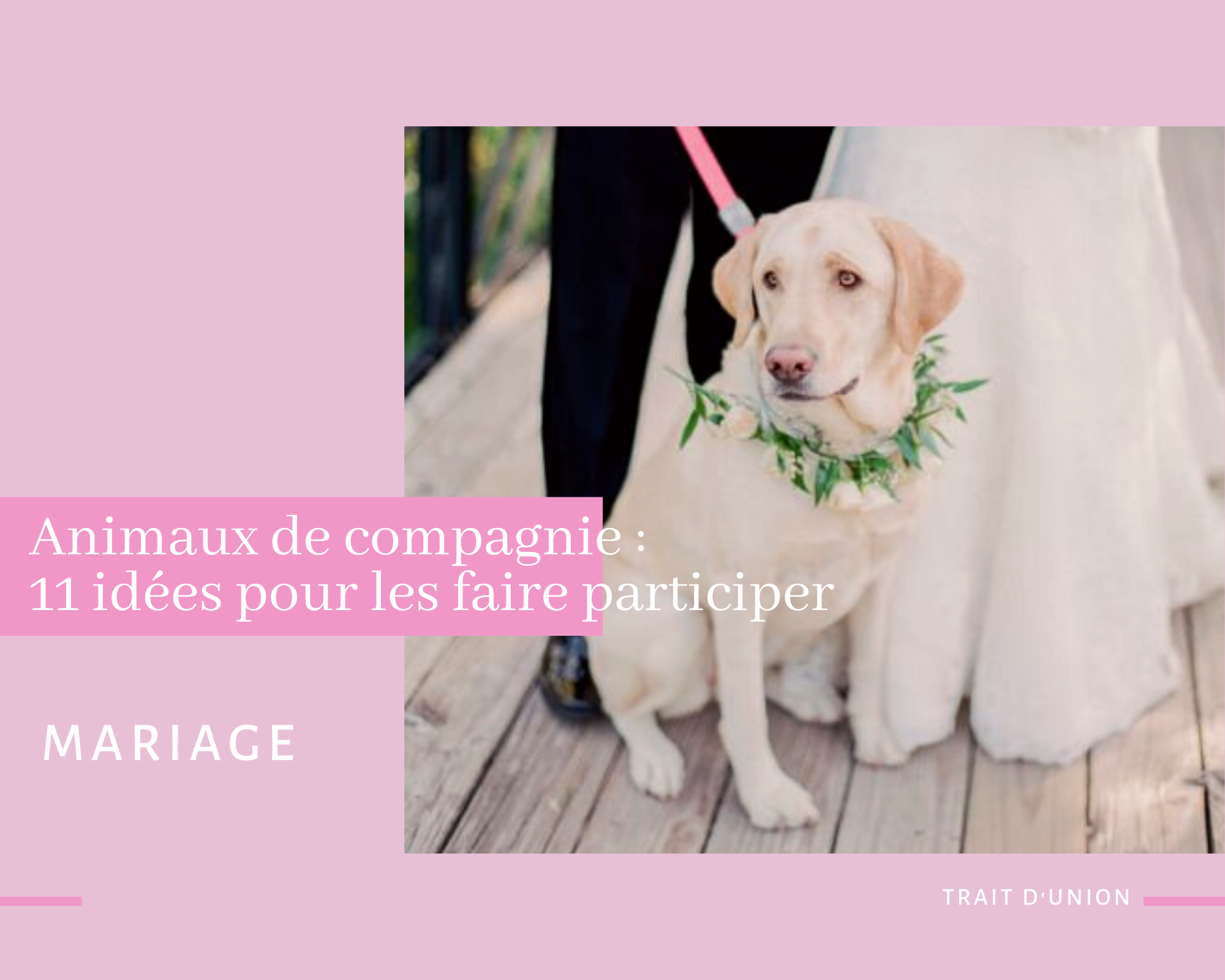 Mariage animaux
